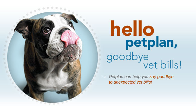 hello petplan